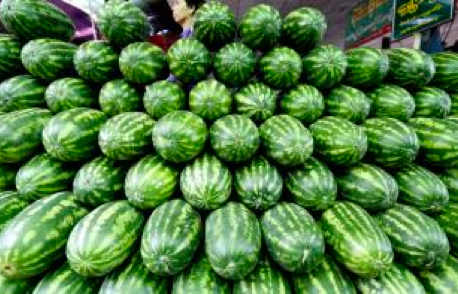 Melon Exporters Plan to Set Standard Prices